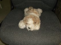 Ty Beanie Buddy Dog in Glendale Heights, Illinois