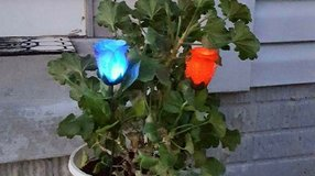 Indoor/Outdoor Decoritve silk Rose LED in Bellevue, Nebraska