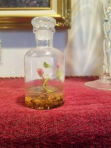 SMALL LIVING PLANT IN A GLASS BOTTLE in Fort Campbell, Kentucky