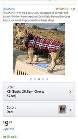 dog red sweater in Okinawa, Japan