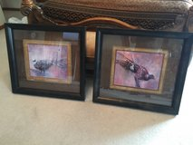 Two great pheasant pictures in Joliet, Illinois