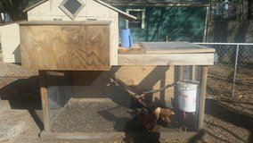 chicken and coop/ in Beaufort, South Carolina