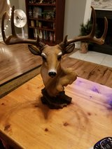 Deer head decoration in Fort Campbell, Kentucky
