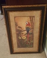 Framed Parrot Picture in Warner Robins, Georgia