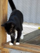 iso homes for cats in Coldspring, Texas