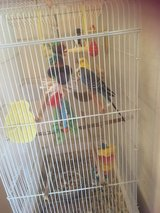 2Parakeets & 2ft cage in Houston, Texas