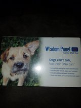 Wisdom panel 4.0 canine DNA test in Fairfield, California
