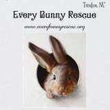Now taking in Rescue Bunnies in Camp Lejeune, North Carolina