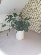Indoor House Plants in DeKalb, Illinois