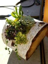Hollowed log succulent garden in Travis AFB, California