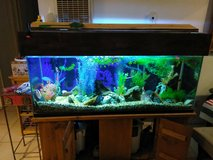 Aquarium  125 gallons in 29 Palms, California