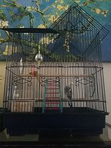 Parakeet with Cage in Camp Pendleton, California