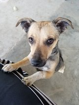 free puppy to a good home. in Vacaville, California