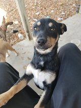 free puppy to a good home in Vacaville, California