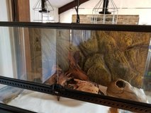 Python/ reptile Exo-Terra XL Glass Terrarium in Fort Leonard Wood, Missouri