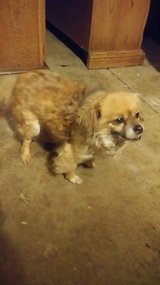 Found Older Male small dog in Vacaville in Travis AFB, California