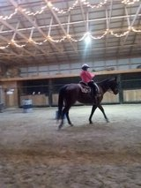 """Double""""O"""" Ranch Horse Boarding & Training & Lessons in Fort Leonard Wood, Missouri"""