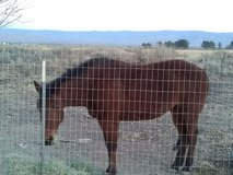Three year old Filly reduced to $1500.00 cash in Alamogordo, New Mexico