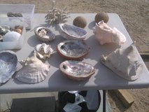 sea shells in Yucca Valley, California