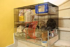 Hamster Cage with Supplies in Stuttgart, GE