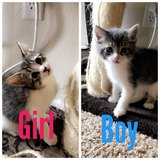 Kittens need new home this weekend in Camp Pendleton, California
