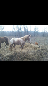 Free to good home have no time to take care of in Madisonville, Kentucky