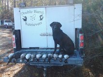 Hunting Dog / Gun Dog Training in Little Rock, Arkansas