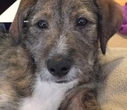 Flash is in need of a forever home in Vista, California