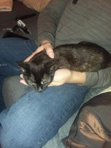 Help! Two abandoned kittens need permanent homes. in Clarksville, Tennessee