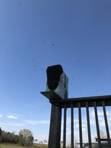 we do (Safe) Honey Bee removals -cheap in Leesville, Louisiana