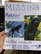HELP FIND MURPHY in Fort Leonard Wood, Missouri