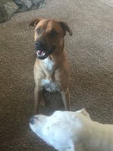 Great dog needs room to run in Clarksville, Tennessee