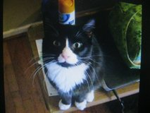 male  cat in Fort Campbell, Kentucky