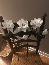 Flowers: Magnolia stems in Glendale Heights, Illinois