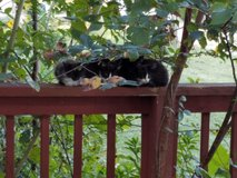 Barn cats in Fort Campbell, Kentucky