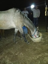 Missing Horse in Coldspring Texas in Coldspring, Texas