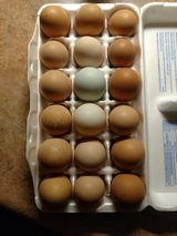 Chicken, Duck and Muscovy eggs in Alamogordo, New Mexico