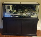 75 Gallon Saltwater Fish Tank &Lot in Pleasant View, Tennessee