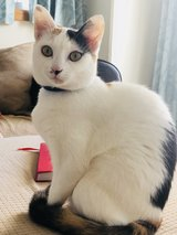 Mother and Daughter cats need forever home! in Okinawa, Japan