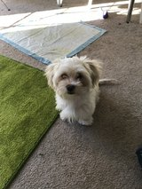 small dog in Fort Riley, Kansas