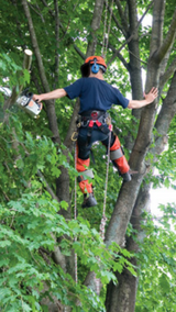 TREE SERVICE in Houston, Texas