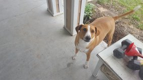 3 yr old rescue needs new home in Fort Polk, Louisiana