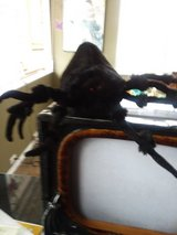 Halloween decorations spider,horror sound box in Algonquin, Illinois