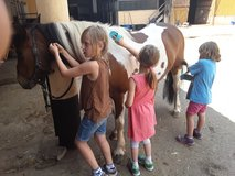 Pony grooming for kids in Baumholder, GE