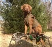 Gun Dog, Duck Dog Training in Little Rock, Arkansas