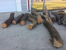 Wanted Osage orange hedge apple trunks in Joliet, Illinois