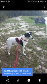 Loving potty trained / house broken dog 6YO in Tyndall AFB, Florida
