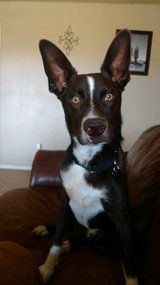 Young male dog (mutt) (reposted) in Alamogordo, New Mexico
