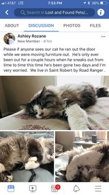 FOUND After 6 Weeks !---  MISSING CAT--- in Fort Leonard Wood, Missouri