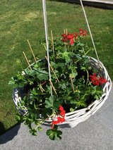 Large white basket for hanging plants in Ramstein, Germany